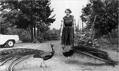 Flannery O' Connor and her peacocks. The Odd Habits and Curious Customs of Famous Writers | Brain Pickings