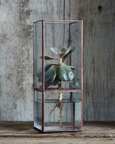 Terra Hydro Terrarium / gorgeous terrarium from Nalata Nalata Air Plants, Indoor Plants, Cactus Flower, Flower Bookey, Flower Film, Flower Pots, Flower Cafe, Small Apartment Decorating, Cactus Y Suculentas