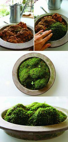 Moss garden growing 101