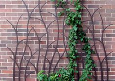 Branching Trellis by Trellis Art Designs.. Beautiful against the house even when the vine has died down for the winter