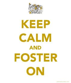 foster the people :) Lyric Quotes, Lyrics, Qoute, Music Is Life, My Music, Stage Ae, Mark Foster, Thats So Me, Foster The People