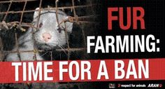 (via Boycott J. Lopez, Protest Her Wearing Fur, the Skin of Murdered Animals on Facebook)