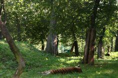 IMG_6128 Gallery, Nature, Plants, Animals, Beautiful, Naturaleza, Animales, Roof Rack, Animaux