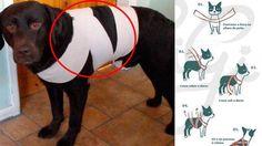 Este truco evitará que tu perro a que no se asuste de los fuegos artific...