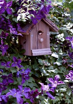 Another little bird house. I wonder what this purple flower is?