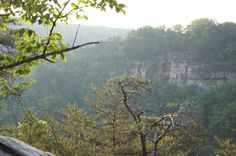 Cloudland Canyon - another view of the canyon rim.