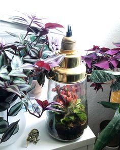 'Pickles' terrarium