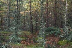 https://flic.kr/p/M812Uz | forest, autumn, colors