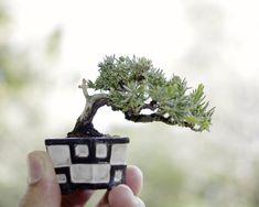 mini bonsai fujisawa8757aga.blog.fc2.com