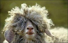 Girls with curly hair quotes quote hair lol funny quotes curly hair humor. OMG so me lol! Funny Animal Photos, Funny Animals, Funny Pictures, Cute Animals, Wild Animals, Crazy Animals, Hilarious Photos, Animal Funnies, Farm Animals