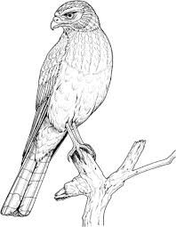 Perched Eagle coloring page from Eagle category. Select from 31927 printable crafts of cartoons, nature, animals, Bible and many more. Printable Crafts, Free Printables, Free Printable Coloring Pages, Haku, Eagle, Cartoon, Tejido, Pintura, Free Printable