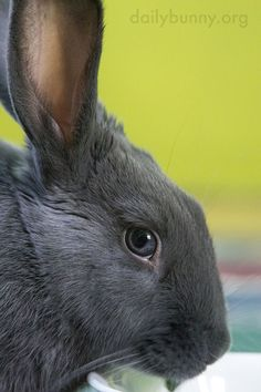 Image result for bunny from side image