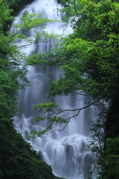 Divine Sacred Waters & Plant Life ..