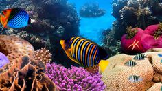 How The United Nations Helped Protect The Great Barrier Reef ...