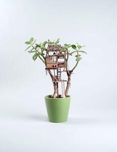 une cabane pour une plante grasse