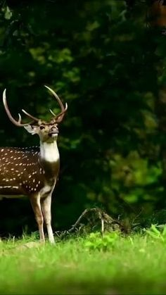 Cute Wild Animals, Rare Animals, Animals And Pets, Funny Animals, Beautiful Creatures, Animals Beautiful, Cat Pose, Funny Animal Videos, Pet Birds