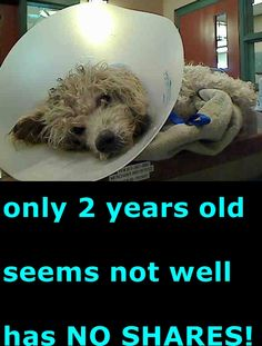 ****URGENT 8/9/15 GILBERT ~ Animal ID #A690168. I am a Male (Neutered), White Miniature Poodle. The shelter thinks I am about 2 years old. I have been at the shelter since June 04, 2015. Rancho Cucamonga Animal Care and Adoption Center Telephone ‒ (909) 466-PETS (7387) 11780 Arrow Route Rancho Cucamonga, CA Fax (909) 919-2698 https://www.facebook.com/OPCA.Shelter.Network.Alliance/photos/pb.481296865284684.-2207520000.1433630942./831525556928478/?type=3&theater