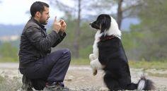 Hundetricks beibringen – Erste Schritte – Hundeerziehung online