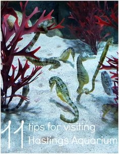 My top tips for visiting Hastings Aquarium - how to get the most out of your…