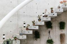 steps of plants