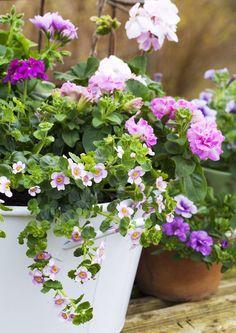 Kesän kauneimmat ruukkukukat | Meillä kotona