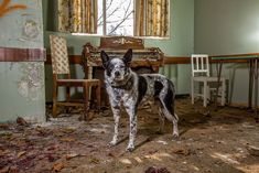 Urban Search and Rescue Dog: http://www.boredpanda.com/working-dog-photography-shepherds-realm-andrew-fladeboe/