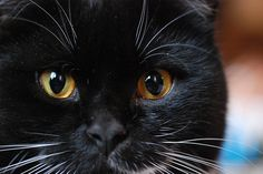 Cat Adoption:  5 Unusual Ways To Get Cats Adopted #cats #cat adoption
