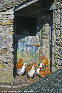 FARM-03--Yorkshire-Dales-farmyard,-Selside.jpg 434×650 pixels
