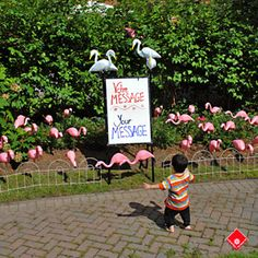 Rent Birthday Yard Signs In Montreal With 40 Party Flamingos The Front Lawn Decorations Are A Wonderful Surprise For Any Occasion
