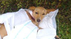 Собаку нашли завёрнутой в пелёнку…