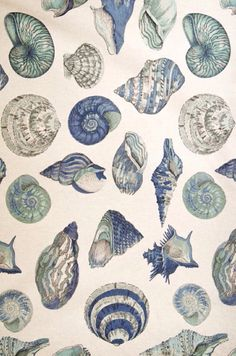 Seashell nautilus fabric in sea glass tones of green, blue, and aqua