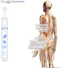 How to Use Zygote Body App to See the Human Body in Human Body Systems, Cold Treatment, Self Massage, Physical Therapist, Fitness Gifts, Anatomy And Physiology, Nurse Life, Massage Therapy, Health And Wellness
