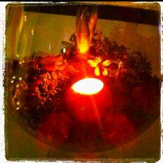 Christmas decoration, moss, candle in apple, hyasint, cinnamon sticks, lingonberry.