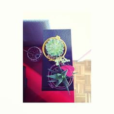 new at home #cactus #green #garden #city