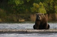 Image result for bear photos