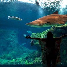 Yes we love #sharks @Cretaquarium @DiscoverGRcom @VisitGreecegr @myhersonissos ! #menoumellada #Cretaquarium