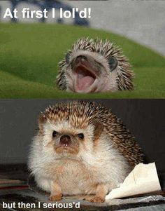 I don't know why this is so funny...possibly because my mind automatically leaps from hedgehogs to martin freeman :P