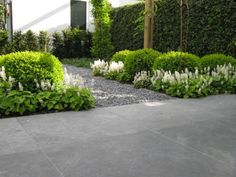 The boxwoods retain structure and color when the hastas are dormant.