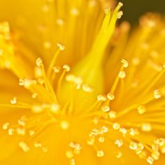 ~ explosion ~ by Janey Kay, via Flickr  @Lensbaby