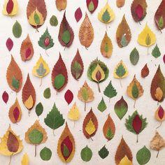anniepellerinForêt de feuilles