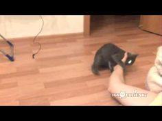 Stubborn hunter kitten (Упрямый охотник)