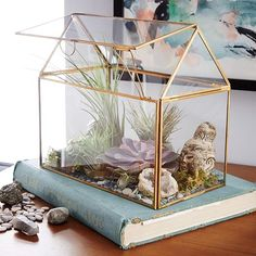 Display Box Terrarium, House
