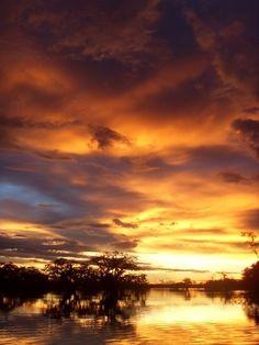 Cuyabena Reserve, Amazon, Ecuador