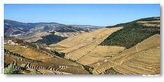 S_Joao_Pesqueira_douro_socalcos02 (VRfoto) Tags: portugal wine unesco porto douro mundial alto vinho worldheritage vinhas patrimnio altodourovinhateiro socalcos