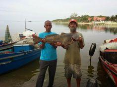 Notícias de São Pedro da Aldeia: REGIÃO DOS LAGOS - Peixe com 14 kg e com mais de u...