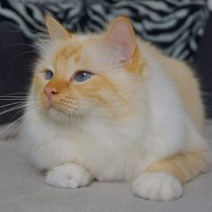 Cute cats live wallpaper cute kittens jumping cute animals pinterest harry my baby boy he is getting so dam big he will sone be altavistaventures Images