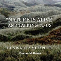 Terence McKenna has it correct. Nature is wisdom encompassed by such grandest beauty. <3 <3 <3