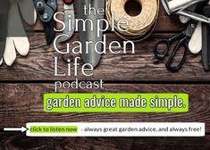 Liquid Fertilizer, Organic Fertilizer, Planting Vegetables, Vegetable Garden, Compost Tea, Tomato Plants, Farm Gardens, Potting Soil, Seed Starting