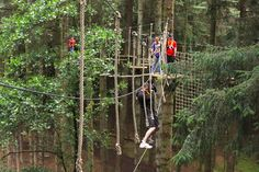 High ropes course Northern Ireland Tree top adventure course, belfast | The Jungle