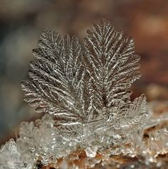 snow crystal...